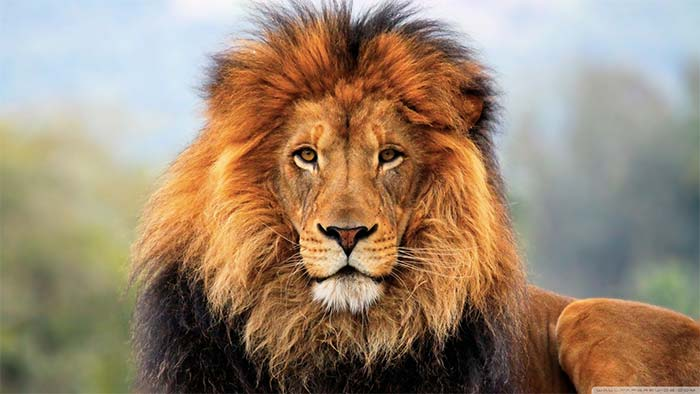 How Being Vulnerable Awakened the Sleeping Lion Within Me